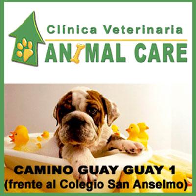 animal-care-1