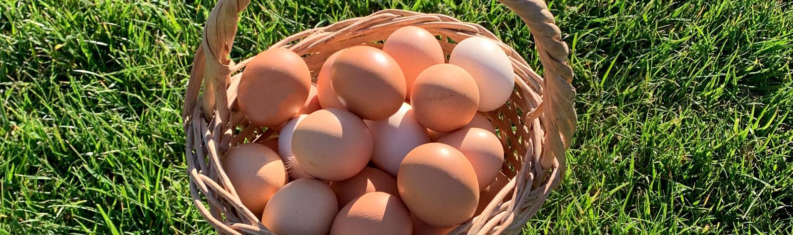Novedades en Eco-Finca: Gallinas felices, huevos saludables