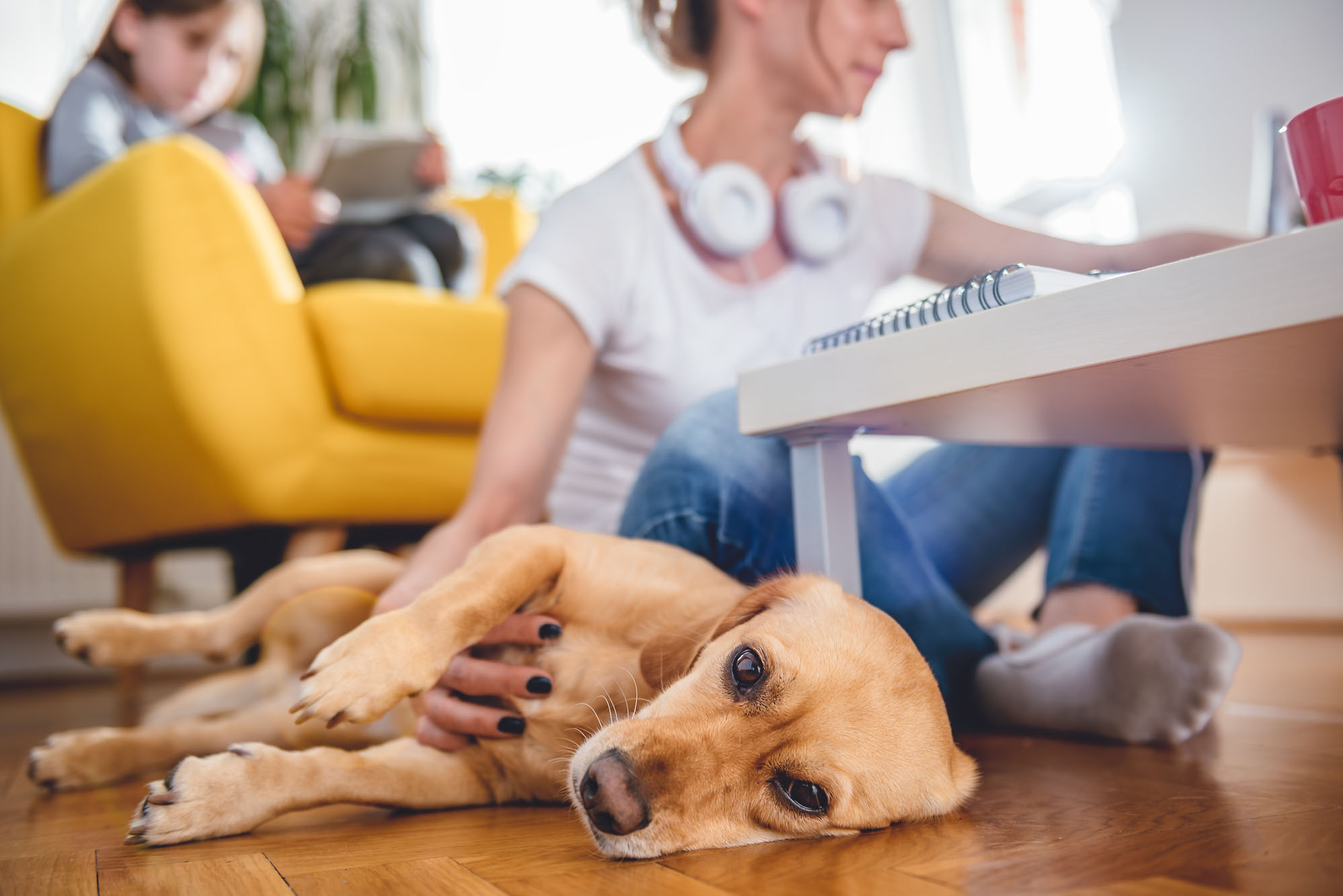 Cuidado con el estrés de las mascotas esta cuarentena