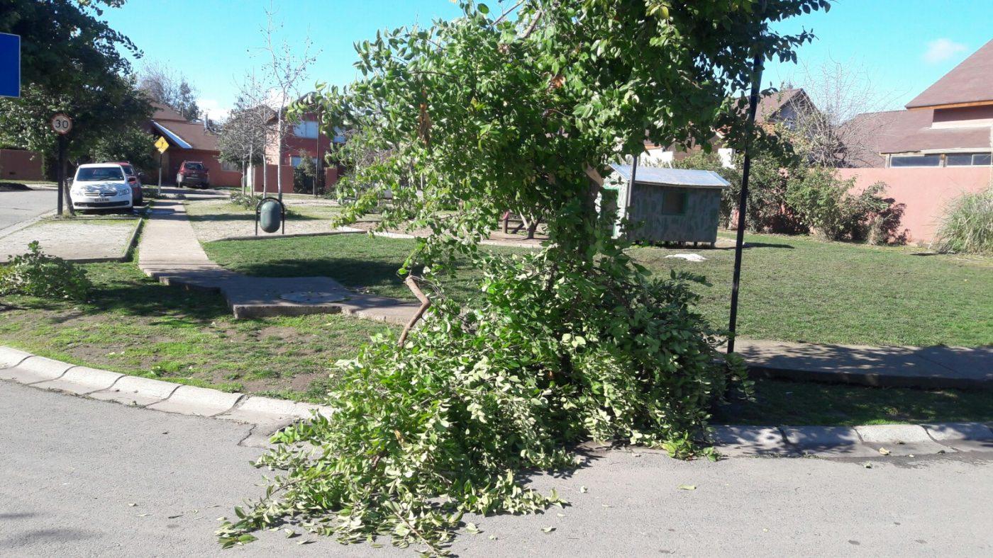 Retiro de ramas y escombros: Soluciones a gran escala