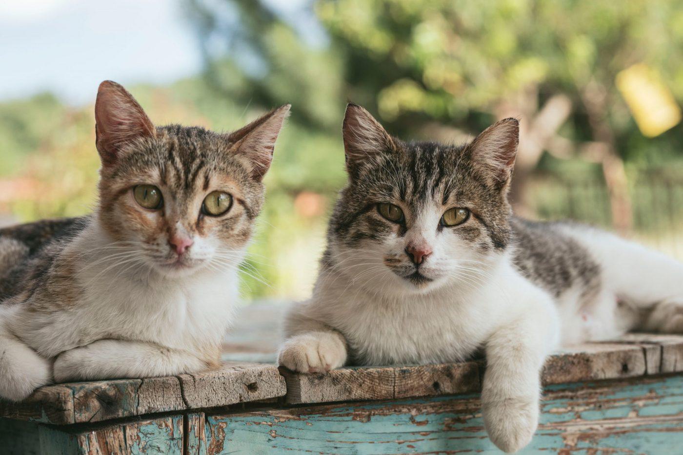 ¡Adoptemos un gato!