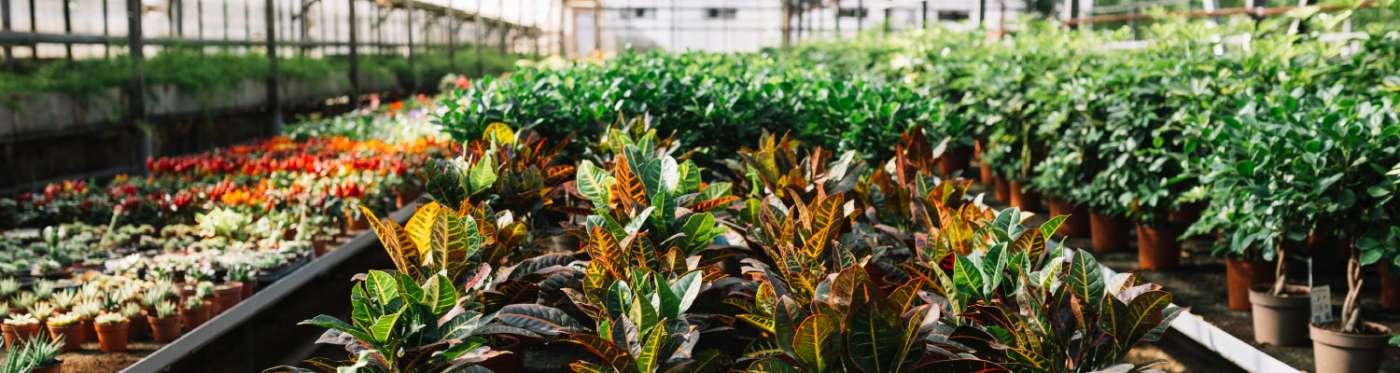Vivero Los Bórquez: Tu jardín, su misión