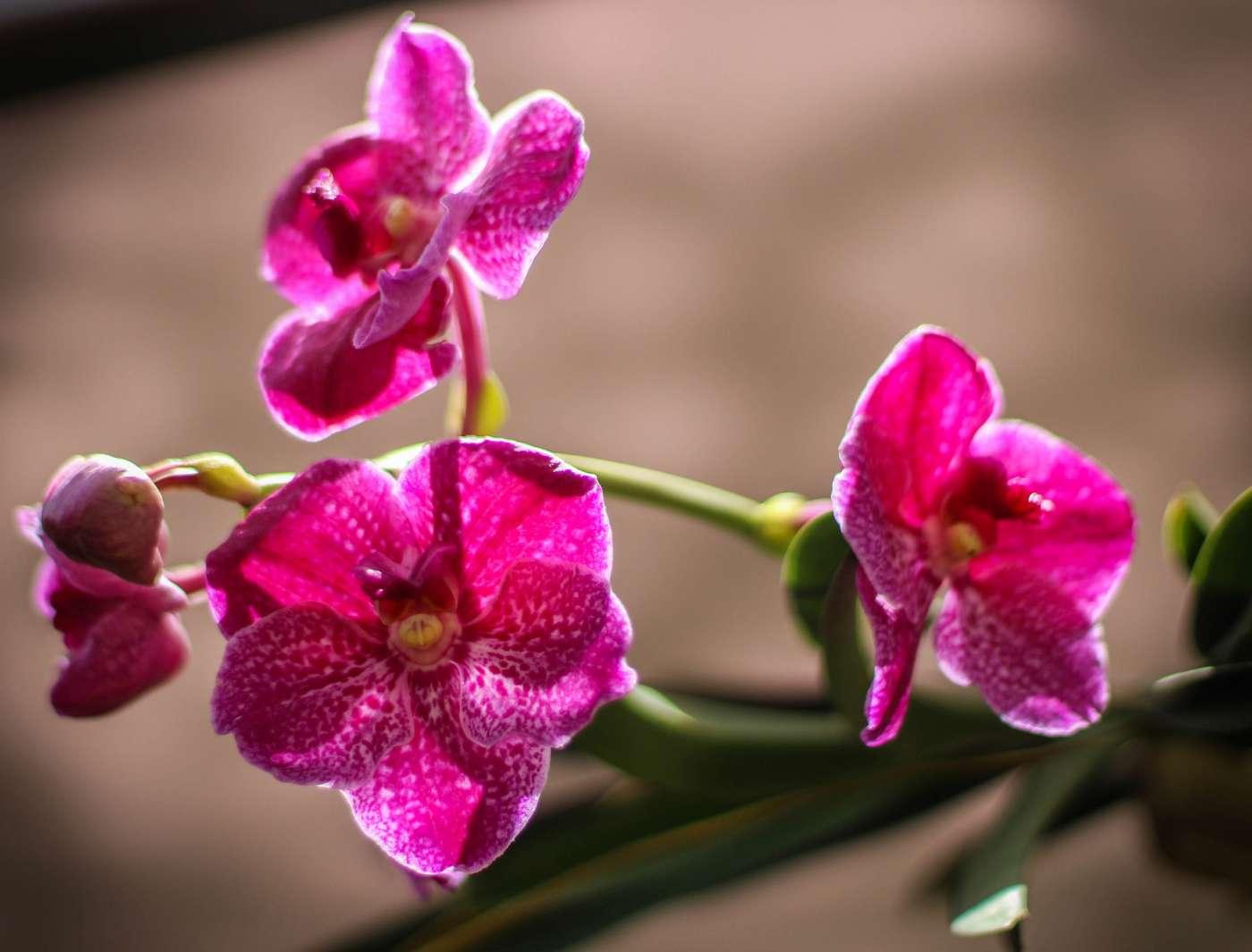 Cómo cuidar tu orquídea en invierno