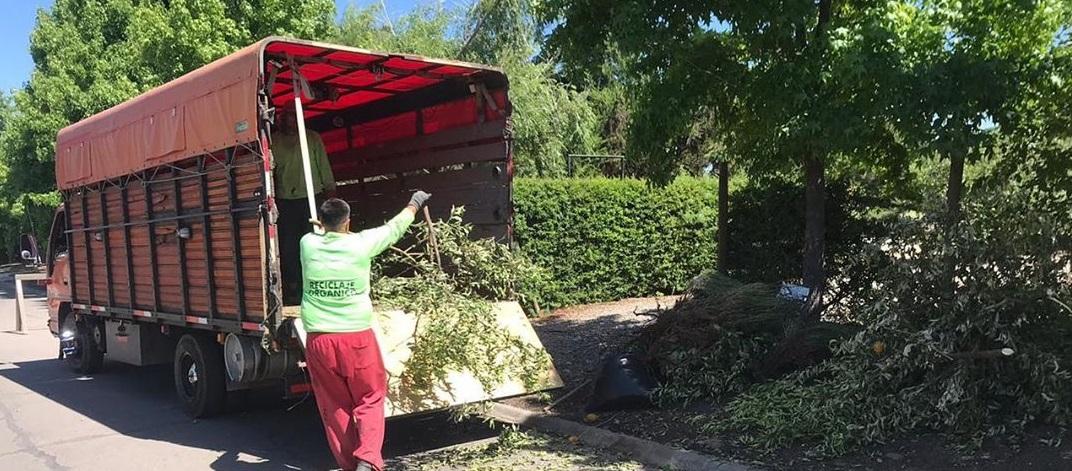 Ramas Área Verde: Retiro de podas a domicilio con un sello ecológico