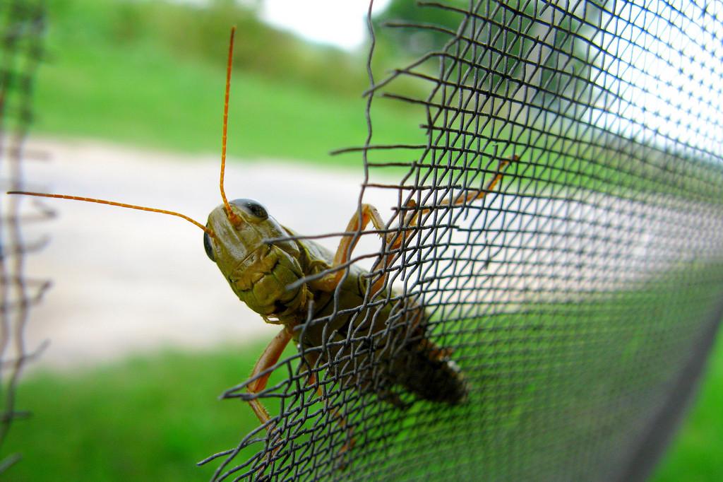 Esta primavera viene recargada de mosquitos, ¡Pero VDS te da la solución para evitarlos!