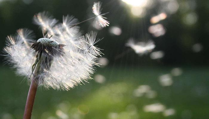 Cómo controlar las alergias primaverales
