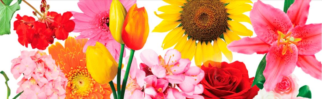 Disfrutemos de las flores en primavera