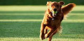 Adiestramiento canino: Fomentando la buena convivencia humano-mascota