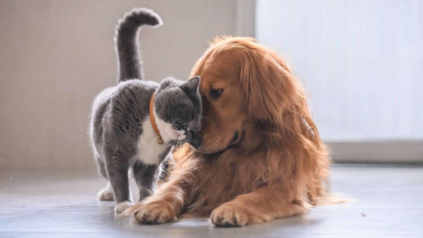 Corte de uñas en gatos y perros ¿Es recomendable?