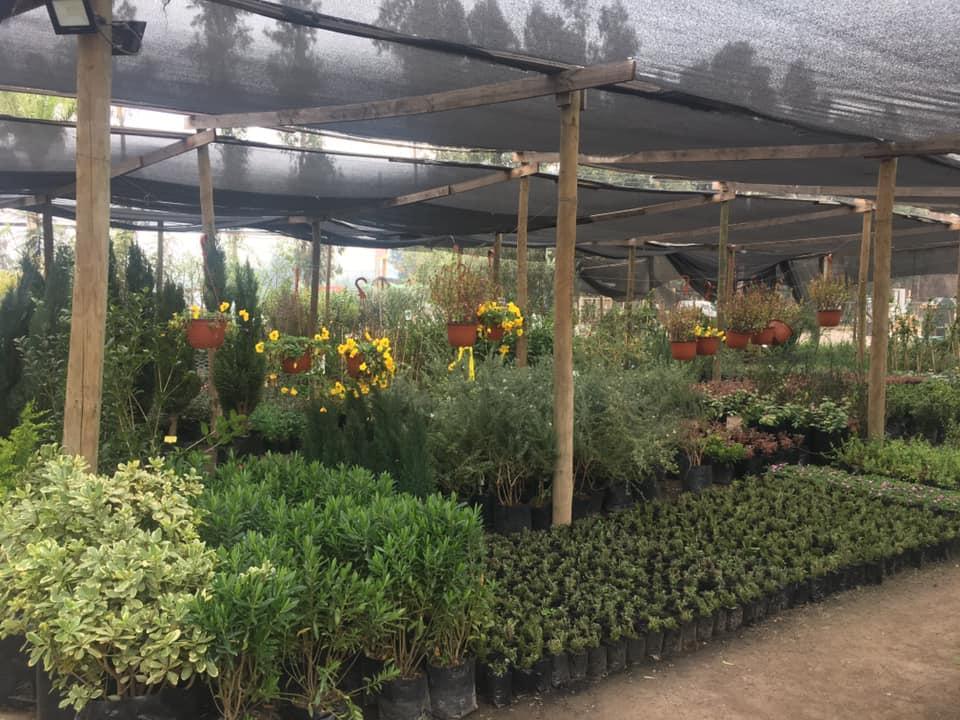 Cómo tener un jardín vistoso y bien cuidado