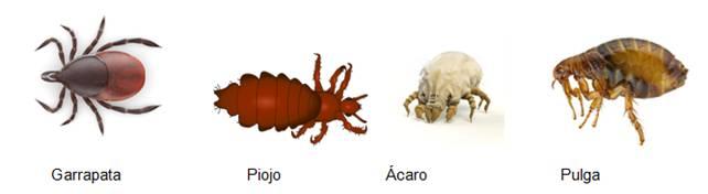 Temporada de pulgas y garrapatas