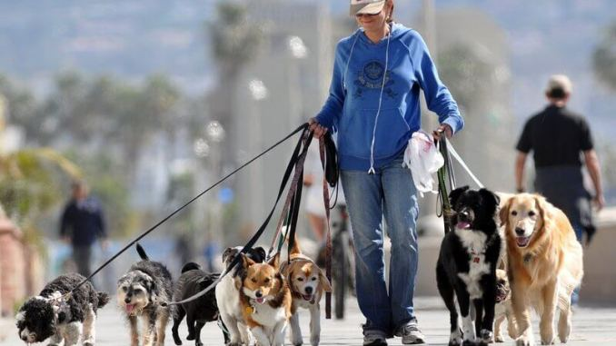 Tres alternativas para el cuidado de tu mascota
