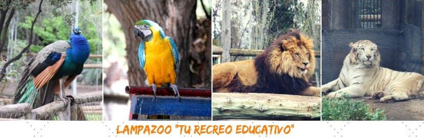 Aprende sobre distintos animales e interactúa con ellos en el Lampa Zoo