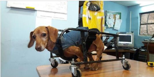 Una segunda oportunidad para aquellas mascotas con movilidad reducida