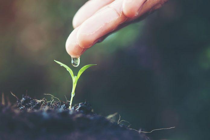 ¿Cómo manifestar abundancia este 2021? 3 aspectos claves para considerar