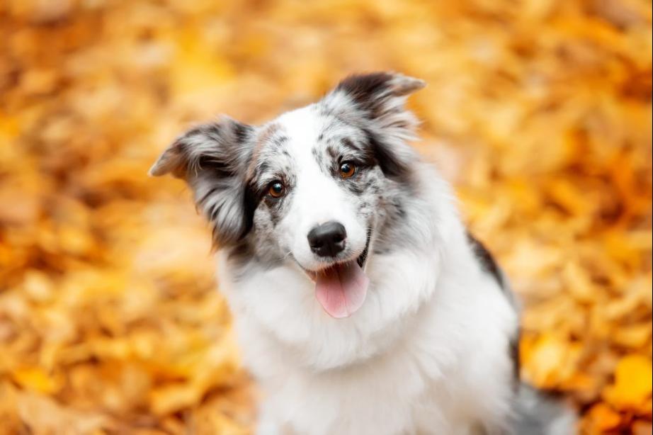 La Importancia de los antioxidantes de origen natural en los alimentos de mascotas