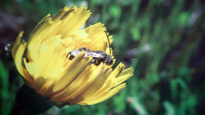 Llaman a cuidar y celebrar el aporte de las abejas en el planeta