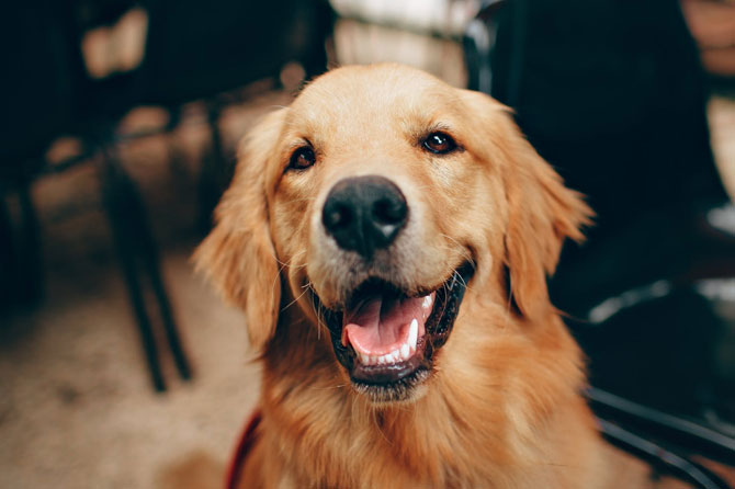 Beneficios y cuidados de los animales en casa