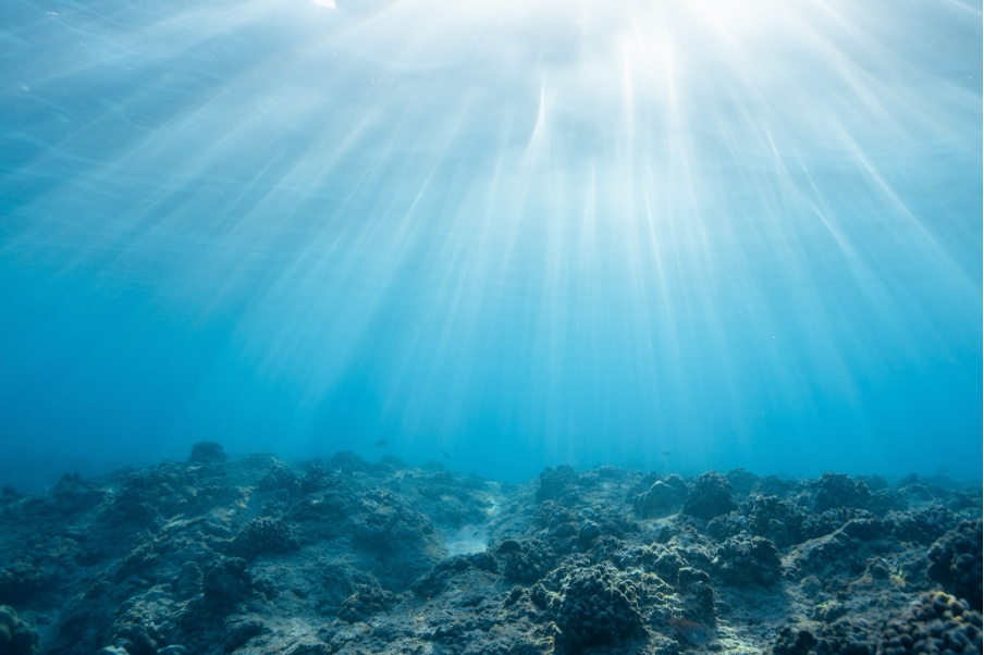 Anuncian alianza mundial para posicionar a las áreas marinas protegidas como herramientas clave para enfrentar la crisis climática