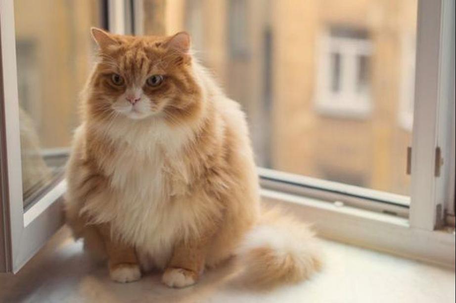 Codependiente, pegajoso o casual y distante: Científicos determinan que la relación entre gatos y dueños se puede encasillar en cinco categorías