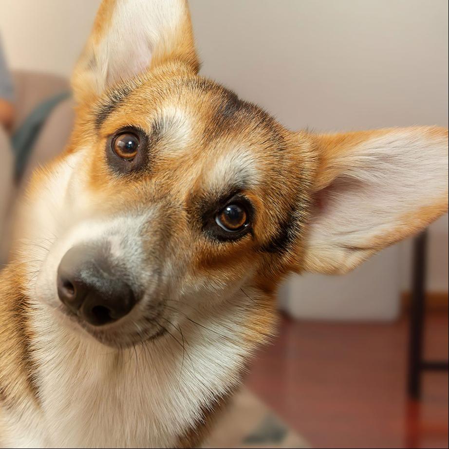 La importancia de la proteína hidrolizada para la salud de las mascotas