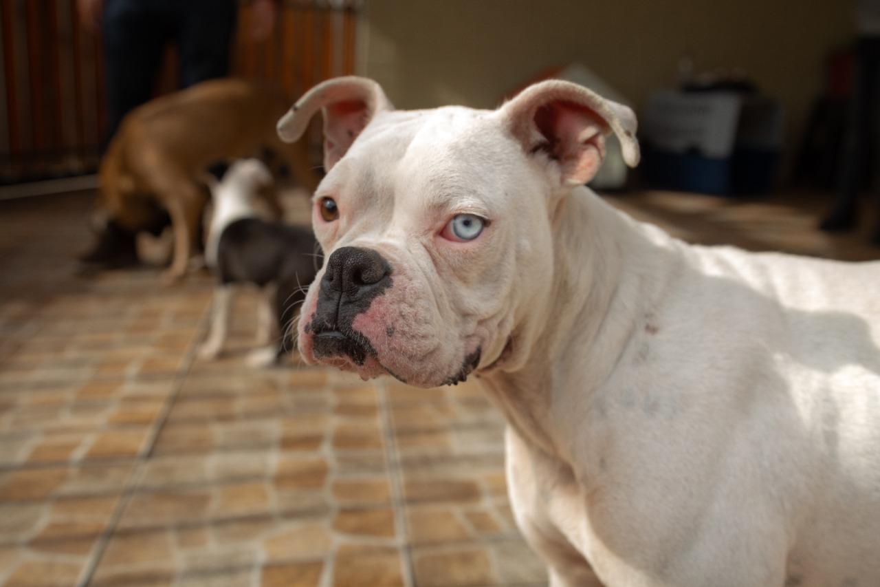 Día mundial del perro; la importancia de evitar el maltrato canino