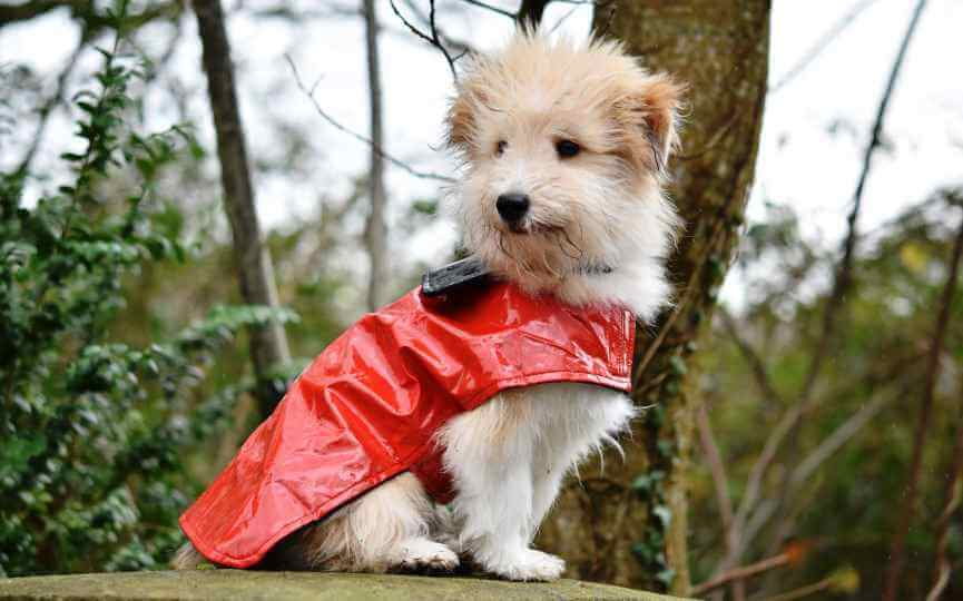 Cuidados de nuestras mascotas en invierno