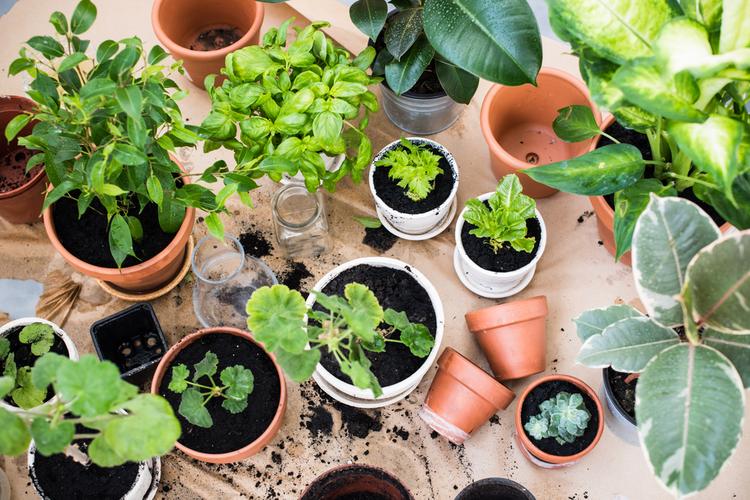 ¿Cómo cuidar nuestras plantas y árboles en invierno? especialistas de la u. de chile entregan recomendaciones