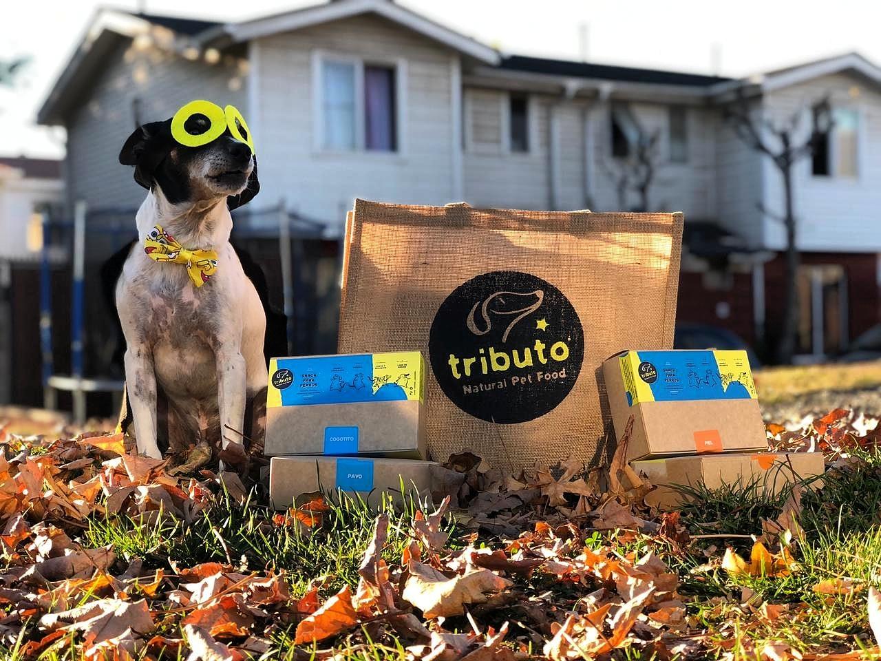 Tributo: Revalorizando materias primas para una sana alimentación canina